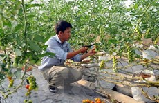 Hỗ trợ 3.000 tỷ đồng cho nông nghiệp công nghệ cao tỉnh An Giang