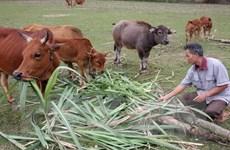 Lào Cai trao đổi kinh nghiệm xóa đói giảm nghèo với Lào