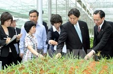 Tỉnh Miyazaki giúp Nam Định phát triển nông nghiệp công nghệ cao