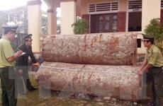 Lâm Đồng khởi tố lái xe chở gỗ lậu đâm chết cán bộ kiểm lâm