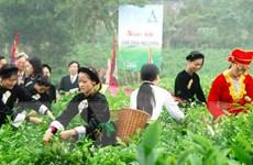 Cây chè Thái Nguyên khẳng định vị thế cây đặc sản làm giàu