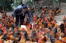 Cục Y tế dự phòng: Việt Nam chưa phát hiện chủng virus cúm mới