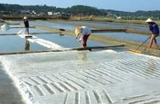 Giá muối liên tục giảm mạnh, diêm dân tại Bình Thuận lo lắng