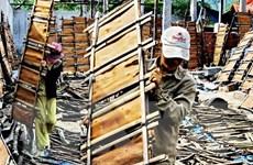 Giá quế Trà Bồng liên tục tăng cao, người trồng phấn khởi