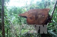 Đắk Nông đình chỉ công tác một Chủ tịch xã vì để mất rừng