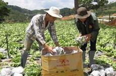 Tiềm năng thu hút FDI vào lĩnh vực nông nghiệp ở Lâm Đồng