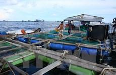 Phú Yên: Tái diễn tình trạng nuôi thủy sản tự phát ở Vũng Rô