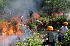 Đã khống chế được vụ cháy rừng phòng hộ tại tỉnh Thanh Hóa