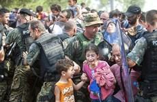 Hàng trăm người di cư leo qua hàng rào, vượt biên vào Macedonia