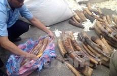 Thưởng nóng đơn vị phát hiện vụ buôn lậu ngà voi, sừng tê giác