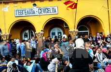 Dòng người di cư tiếp tục đổ về biên giới Macedonia và Hy Lạp