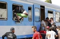 Tình báo Đức: Lực lượng Hồi giáo cực đoan tuyển mộ người tị nạn