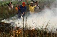 Indonesia phục hồi hệ sinh thái than bùn sau thảm họa cháy rừng