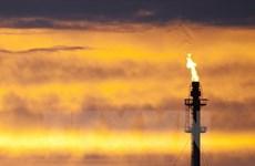 Giá dầu thô giảm xuống mức thấp nhất trong gần 7 năm qua