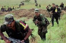 Lực lượng FARC thả tự do cho binh lính bị bắt làm con tin