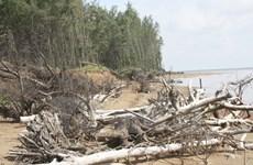 Thanh Hóa kiên quyết xử lý sai phạm chiếm dụng đất rừng phòng hộ