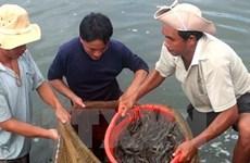 Nguy cơ phá vỡ quy hoạch nuôi trồng thủy sản bởi xâm nhập mặn