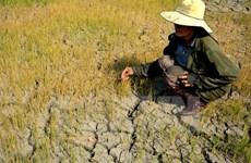Đắk Nông cần quy hoạch sản xuất nông nghiệp gắn thủy lợi