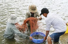Tổng cục Thủy sản: Không bao che các vi phạm của cán bộ