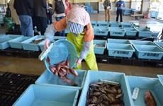 Tỉnh Miyagi hỗ trợ doanh nghiệp xuất khẩu hải sản sang Việt Nam