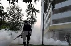 Cảnh báo nguy cơ virus Zika lan rộng ở châu Á-Thái Bình Dương