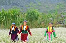 """Ấn tượng Lễ hội hoa Tam giác mạch """"Đá nở hoa"""" tại Hà Giang"""