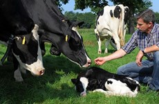 Australia đối mặt với nguy cơ phải nhập sữa từ nước ngoài