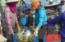Đợt ra khơi có doanh thu kỷ lục 7,5 tỷ đồng của ngư dân Quảng Trị