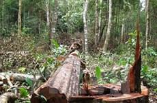 Quảng Nam: Rừng phòng hộ Bắc Trà My tiếp tục bị chặt hạ
