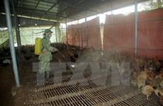 Nam Định công bố hết dịch cúm gia cầm A/H5N1 trên địa bàn