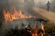 Indonesia tích cực triển khai sáng kiến ngăn ngừa cháy rừng