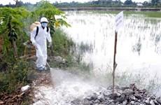 Xuất hiện thêm ổ dịch cúm gia cầm H5N1 tại tỉnh Cao Bằng