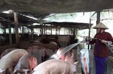 Tạm dừng tái xuất thịt, phủ tạng lợn đông lạnh qua cửa khẩu phụ