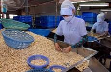 Giải bài toán nguyên liệu cho ngành chế biến xuất khẩu điều