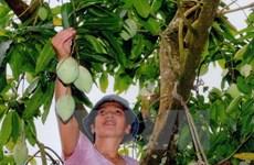 Xu hướng phát triển cây đặc sản có giá trị cao nhờ tiêu thụ tốt
