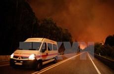 Nắng nóng tiếp tục gây cháy rừng ở một số nước khu vực Nam Âu