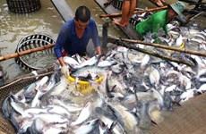 Doanh nghiệp vẫn lạc quan khi Mỹ kiểm tra cá tra Việt Nam