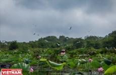 Khu Ramsar Láng Sen: Trải nghiệm khó quên với du khách