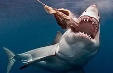Đại sứ quán Việt Nam tại Chile thông tin về vụ việc vây cá mập