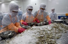VASEP: Ngành tôm Việt Nam đối mặt với áp lực nguồn cung