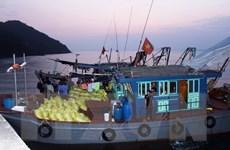 Quảng Ninh: Bắt giữ 8 tàu khai thác thủy sản trái phép