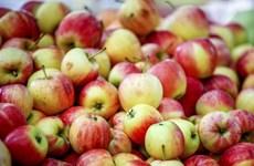 Hải quan Trung Quốc tăng kiểm tra hoa quả tươi nhập khẩu từ Mỹ