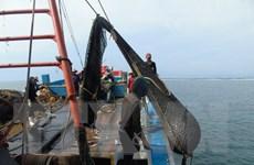 Tàu giã cào hoạt động sai tuyến vẫn diễn ra ở Bình Thuận