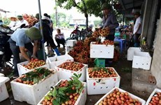 Các sản phẩm nông nghiệp công nghệ cao sẽ được giới thiệu ở Hà Nam