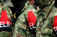 Colombia: Lực lượng nổi dậy ELN công bố ngừng bắn đơn phương