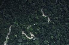 Hàng chục nghìn hécta rừng Amazon ở Peru bị tàn phá nghiêm trọng