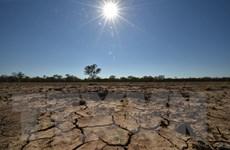 Nông dân Australia chống chọi với tình trạng hạn hán nghiêm trọng