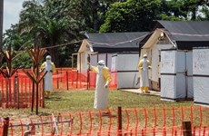 Số ca nhiễm Ebola tại Cộng hòa Dân chủ Congo tăng mạnh
