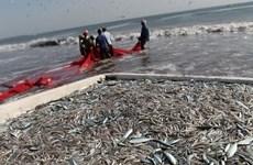 FAO hỗ trợ cuộc chiến chống đánh bắt cá trái phép tại Trung Mỹ