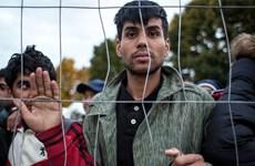 Một thanh niên di cư chưa rõ quốc tịch bị hành hung tại Đức